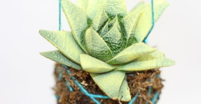 kokedama; moss ball; handmadebykelly.com thestir.com