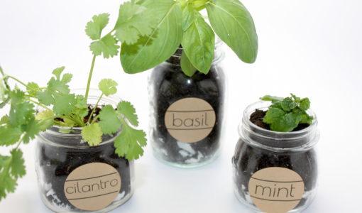 Herb Garden Labels; onlinelabels.com; handmadebykelly.com