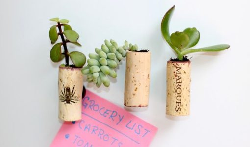 Mini Succulent Cork Magnets; handmadebykelly.com; mnn.com